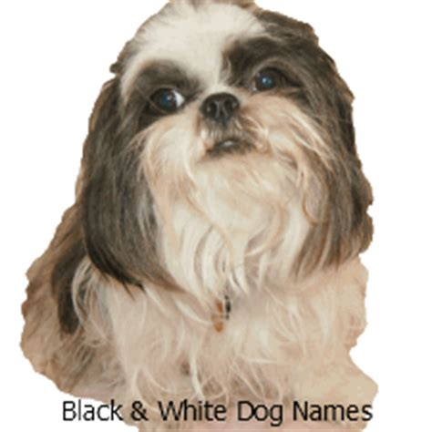 black and white puppy names puppy names