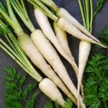 60 Biji Benih Wortel Chantenay Cored bibit wortel kuroda jepang
