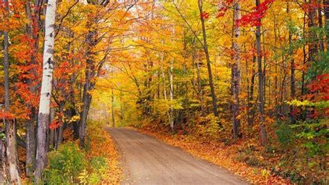 turn    maple leaf  celebrate  years