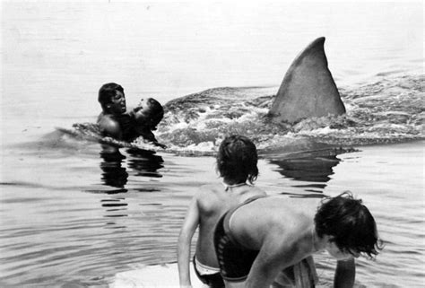 boat on jaws crossword jaws sends shivers of terror down the spine 1975 review