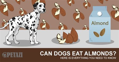 are almonds bad for dogs can dogs eat almonds are almonds bad for dogs ultimate guide here