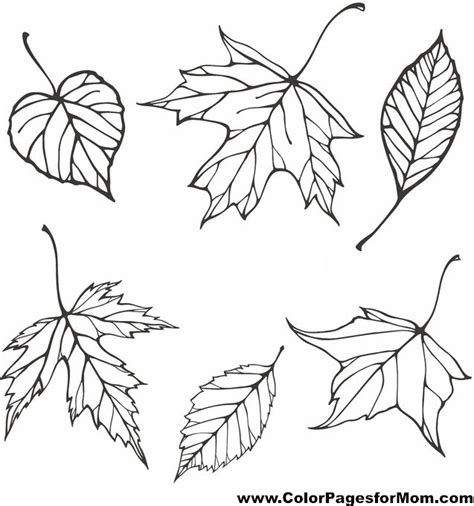 coloring pages for adults leaves advanced leaves coloring page 21