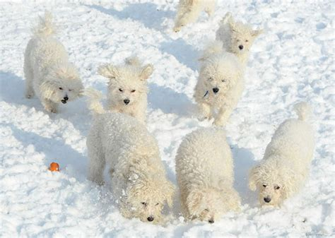 puppies in snow no business like snow business lazy oaf journal