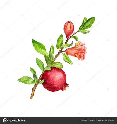 fiori melograno ramo di albero di frutta con foglie fiori e melograno