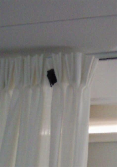 vleermuis in huis vleermuizen onder de nok vleermuis forum