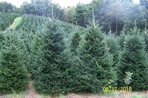 north carolina christmas tree farm mountain people like