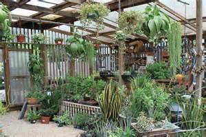 Succulent House rock oak deer support your independent nursery month