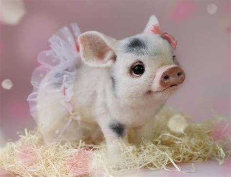 imagenes animales para bebes bonitas im 225 genes de animales beb 233 s para descargar y