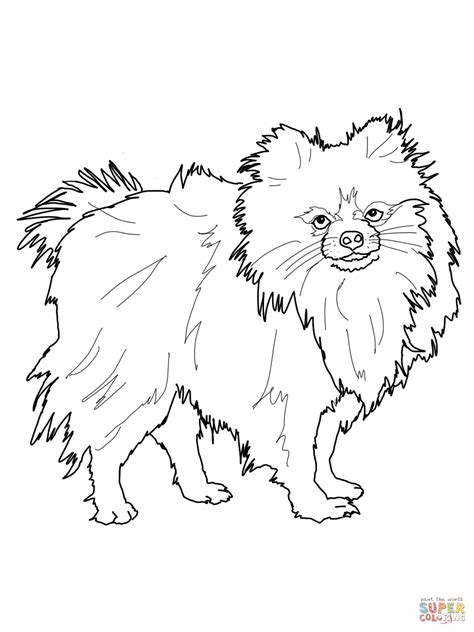 pomeranian coloring dog breeds picture