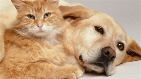 straits times obituary section obituaries now available for pets in singapore softpedia