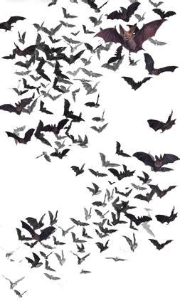 image swarm of bats png vampire wars wiki fandom