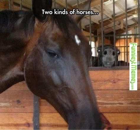 Funny Horse Memes - completely ignores demon monkey doll next to it panics