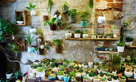 flower shop stock photo image of sale plants interior