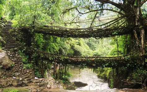 living bridges evenfewergoats across the khasi hills day 3 down to nongriat