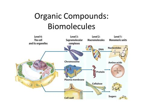 carbohydrates organic compound organic compounds biomolecules ppt