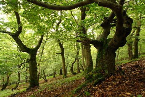 filme stream seiten life is beautiful natur verstehen nationalpark kellerwald edersee
