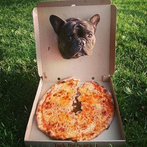 pizza puppy puppies and pizza puppiesandpizza