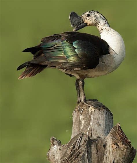 birds n stuff のおすすめ画像 6889 件 pinterest 珍しい鳥 美しい鳥