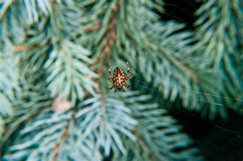 spider web christmas tradition weirdest traditions from around the world santa santa claus