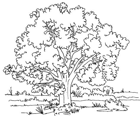 Tree Coloring Pages free printable tree coloring pages for
