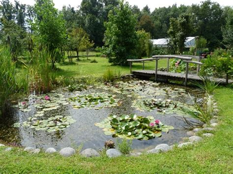 pompe per laghetto da giardino piante acquatiche i nostri laghetti