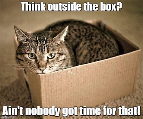 cat   box imgflip