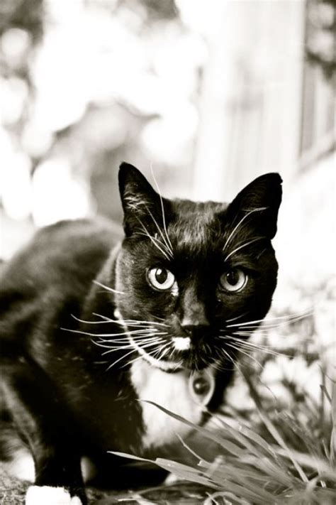 black and white kitty names pictures to pin on pinterest