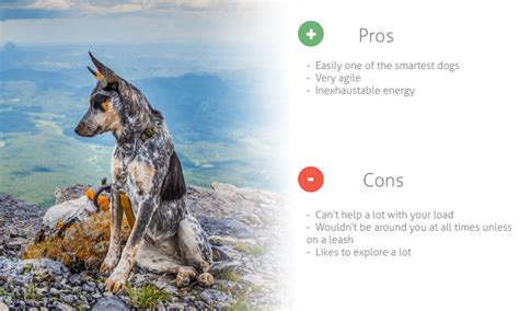 best hiking breeds breeds water breeds low energy breeds pictures of breeds picture