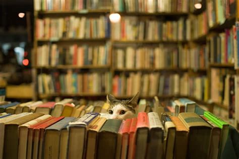 cats and books another bookstore cat flickr photo