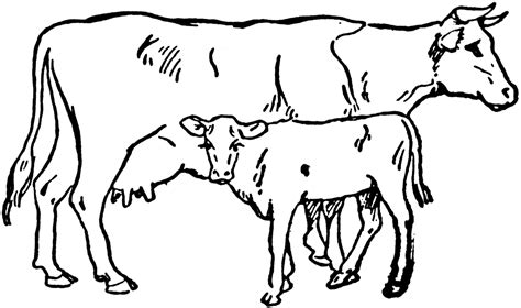 Cow Drawing Outline by Cow Line Cliparts Co