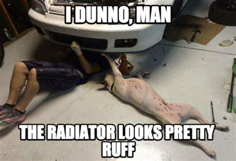 Dog In Car Meme - funny dog car meme jokes memes pictures