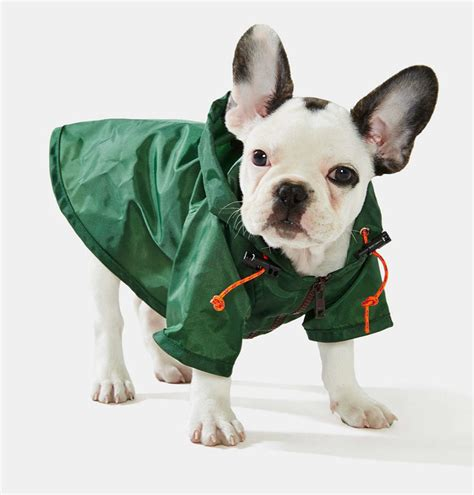 raincoats for dogs raincoats go search for tips tricks cheats search at search