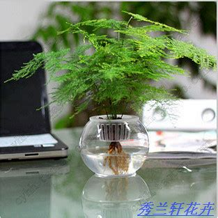 Small Plant For Office Desk Office Desk Small Bonsai Hydroponic Asparagus Small Bonsai Air Purifying Plants Mini Plant Set Jpg