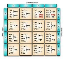 Genetic Table by Genetics Notes Genetic Code