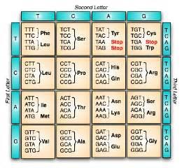 genetics notes genetic code