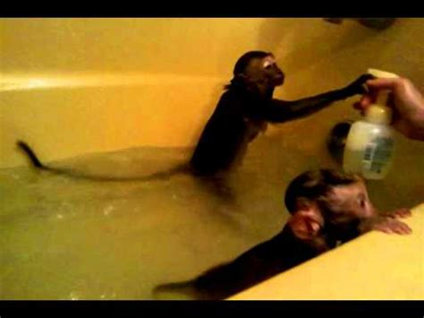 baby monkeys in bath tub