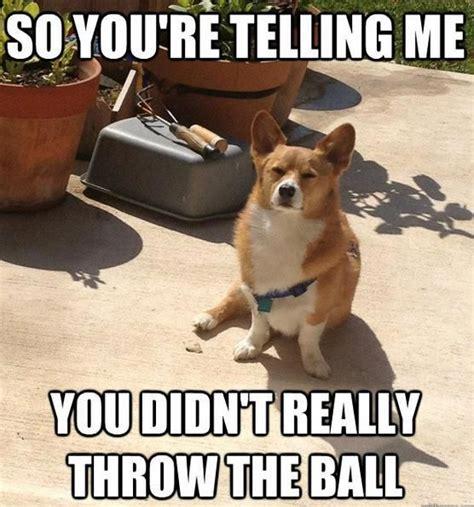 Funny Corgi Memes - corgi funny z corgi silly pinterest