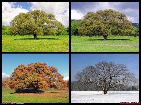 deep south four seasons four seasons by past1978 on