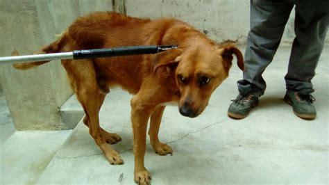 cani da casa marsala le guardie per l ambiente salvano da casa
