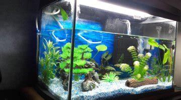 Lu Aquarium Cosmo utilit 233 du bulleur pour un aquarium
