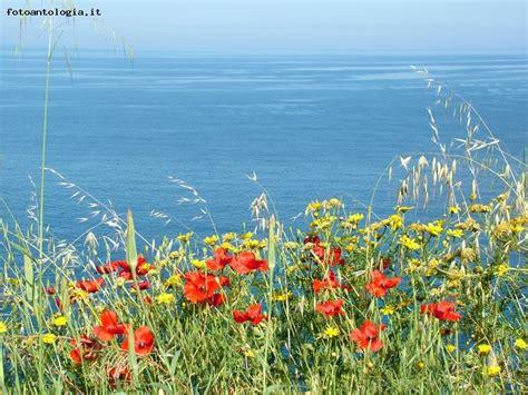 i fiori mare i fiori mare