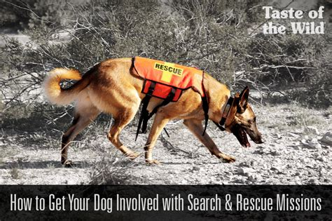 how to your search and rescue how to get your involved with search rescuetaste of the pet food