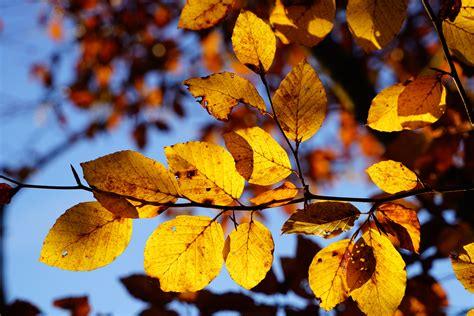 wallpaper pohon coklat gambar langit sinar matahari musim semi musim gugur