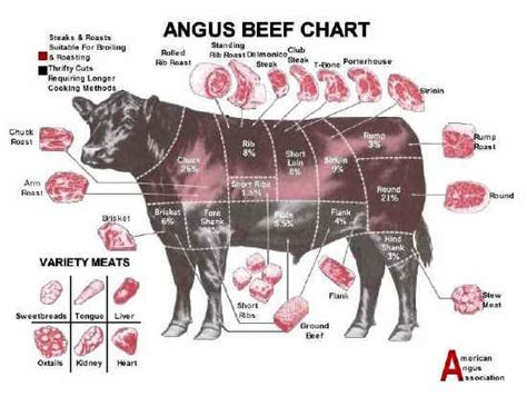 beef cuts diagram angus chart opto photo