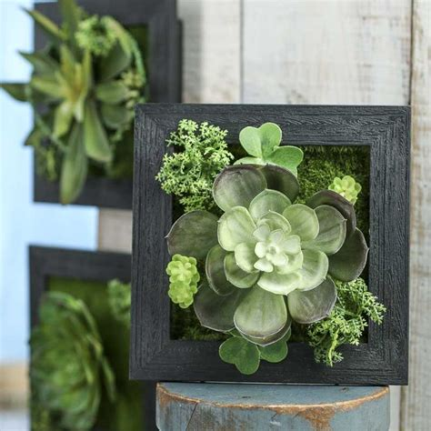 1000 ideas about succulent frame on succulent