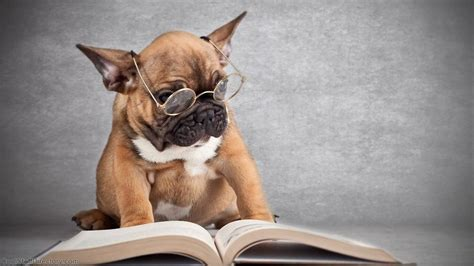 puppy book with book models picture