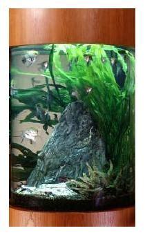 aquarium design criteria the goldfish gazette issue 023 aquarium design