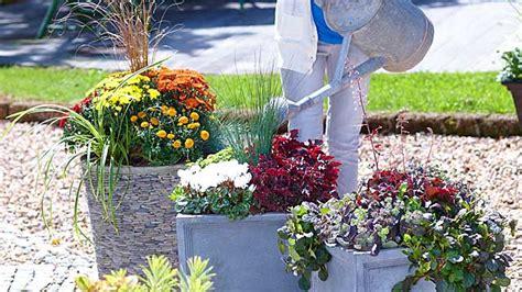 eingangsbereich verschönern pflanzen topfen kubeln terrasse m 246 belideen
