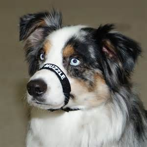 adjustable comfort muzzle for dogs