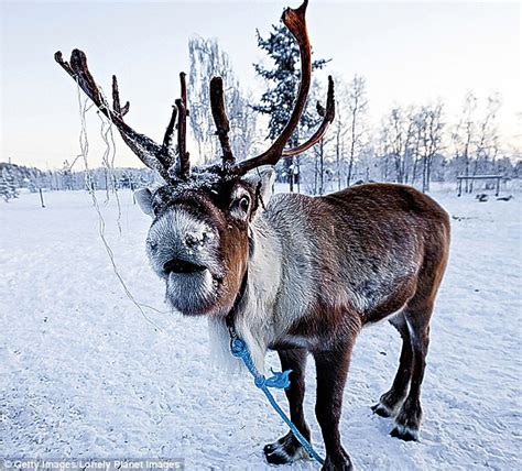 lidl now stocks reindeer meat for christmas but what does